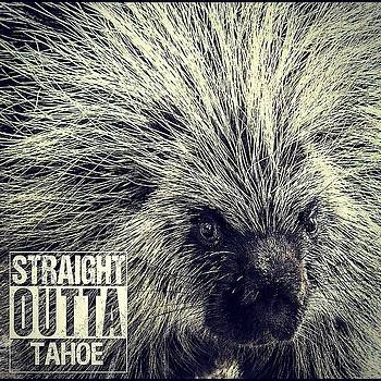Straight outta Tahoe by Martin Gollery