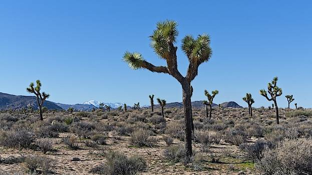 Stretch Your Eyes At Joshua Tree National Park by Allan Van Gasbeck