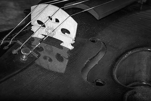 Strings Series 37 by David Morefield