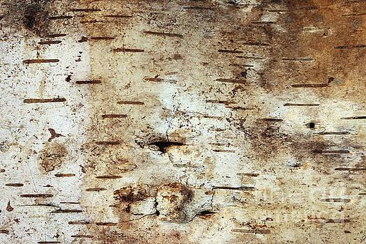 Strip of birch bark by Michal Boubin