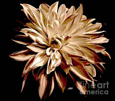 Striped Red and Cream Dahlia by Marsha Heiken
