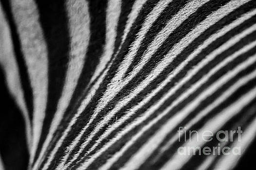 Stripes by SoxyGal Photography