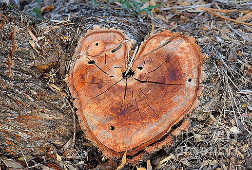 Stump in love by Inessa Williams