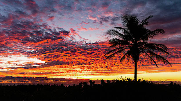 Stunning Sunrise Palm Delray Beach Florida by Lawrence S Richardson Jr
