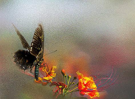 Stylish Monarh by Leticia Latocki