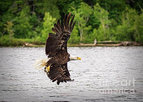 Successful Fishing - Bald Eagle by Jan Mulherin