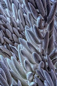 Succulent Texture by Richard Goldman