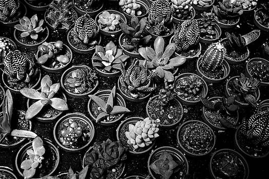 Succulents BW by Russ Barneveld