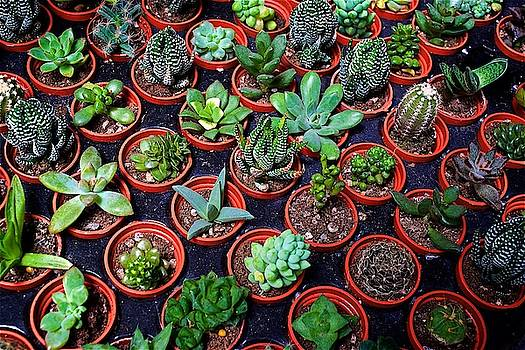 Succulents by Russ Barneveld