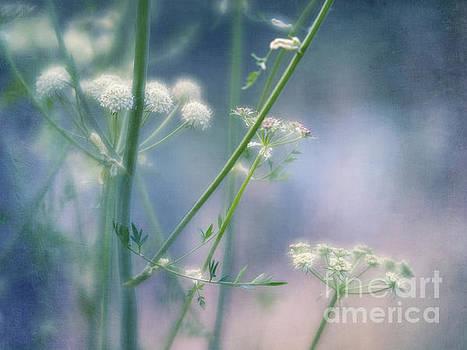 Summer blossoms by Priska Wettstein