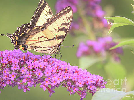Summer delight by Claudia M Photography