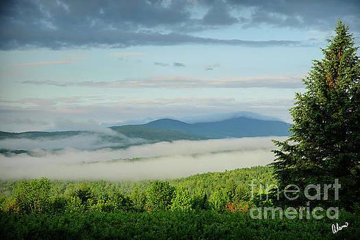 Summer Fog by Alana Ranney