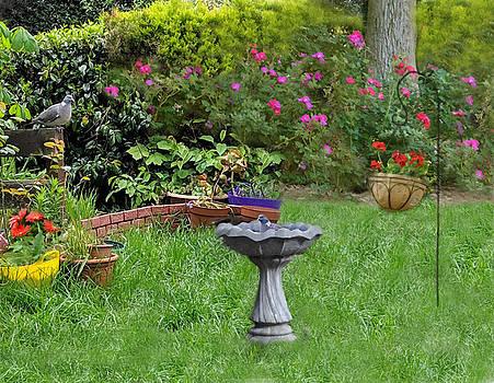 Summer Garden Visitors by Sandi OReilly