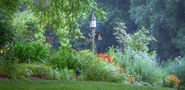 Summer Rain by Mary Lynn Giacomini