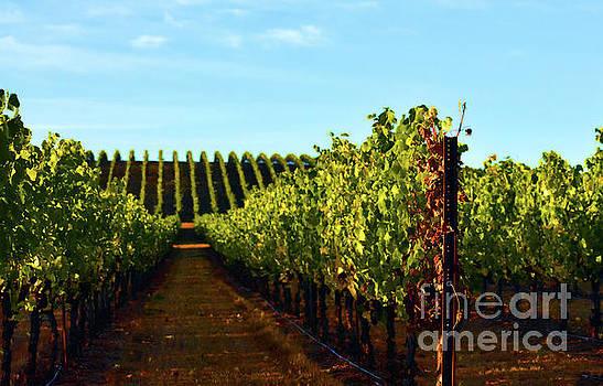 Summer Vineyard by Ellie Asha Photography