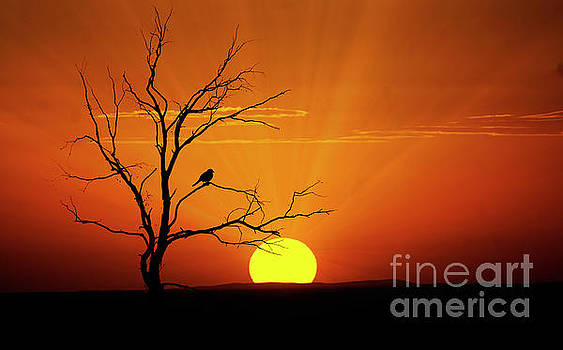 Sun 39 by Ben Yassa