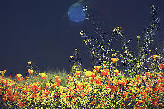 Sun Bathing by THiRDiPHOTO