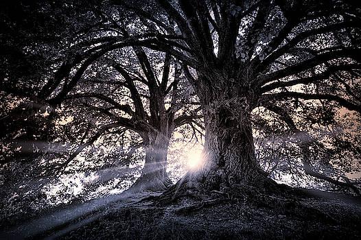 Daniel Hagerman - SUN FLARE FOREST