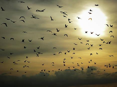 Sun Flock by Dave Matchett