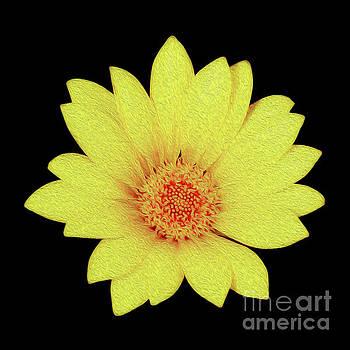 Sun Flower by Kenneth Montgomery