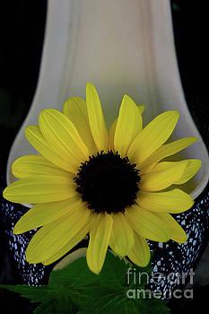 Sun flower Shoe by Sherry Little Fawn Schuessler