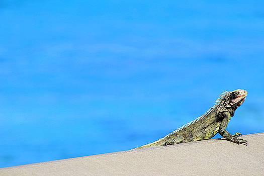 Sunbathing In St. John, USVI by Fiona Kennard