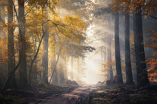 Sunbeams and autumn colors in the misty Speulderbos by Rob Visser