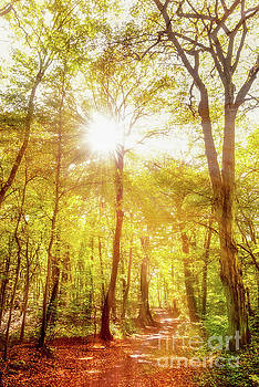 Sunbeams in the forest by Delphimages Photo Creations
