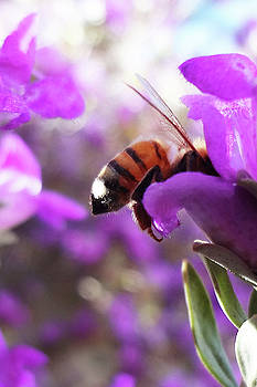 Sunburned Bee Butt by Bruce Iorio