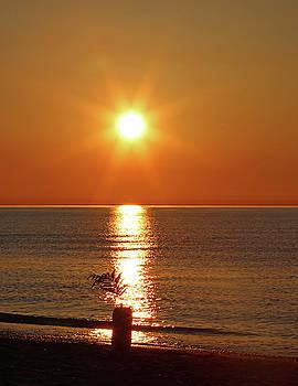 Sunburst by Steve Bell