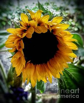 Sunflower 2 by Joan-Violet Stretch