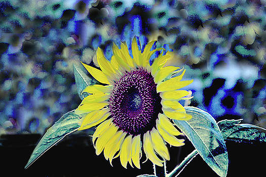 Sunflower Abstract by Sandi OReilly