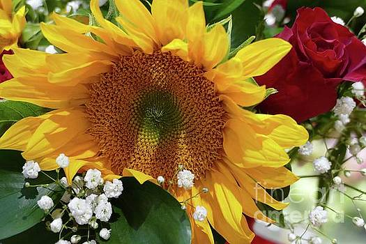 Sunflower and Rose by Cindy Manero