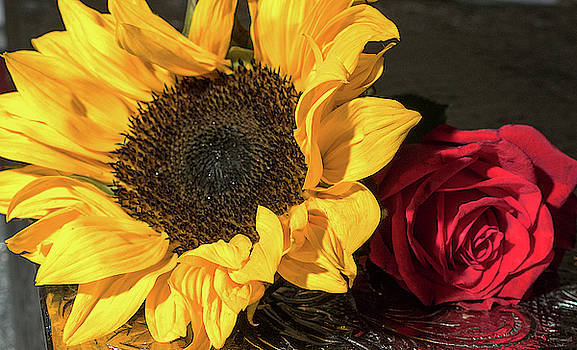 Sunflower and Rose by Laurel Powell