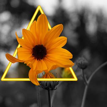 Sunflower Glow by Christine Buckley