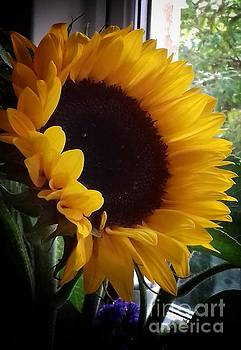 Sunflower in my Garden Window 2 by Joan-Violet Stretch