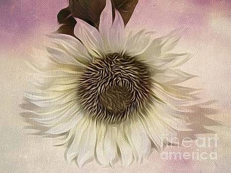 Sunflower In  Pastels by Jeannie Rhode
