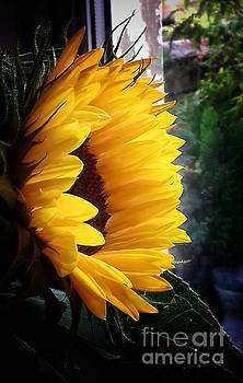 Sunflower in my Garden Window by Joan-Violet Stretch