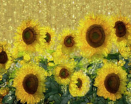 Sunflower by Jack Zulli