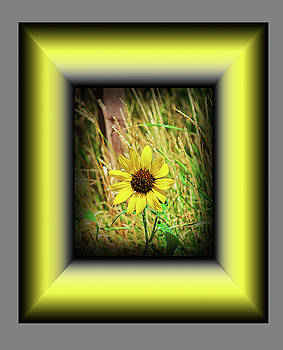 Sunflower by Richard Risely