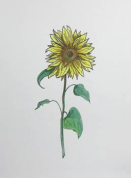 Sunflower  by Tony Clark