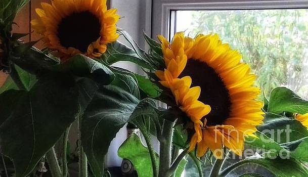 Sunflowers in my Garden Window 6 by Joan-Violet Stretch