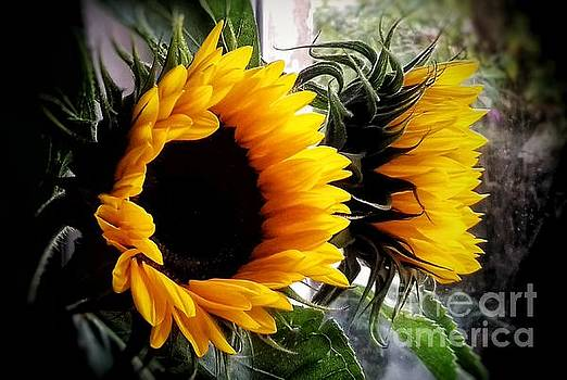 Sunflowers in my Garden Window 5 by Joan-Violet Stretch