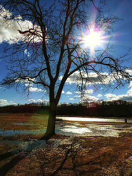 Sunlight Over The Lone Tree by Kathy Gail