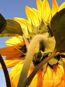 Beatrice Cox - Sunny Flower