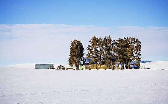 Sunny winter day  by Tatiana Travelways