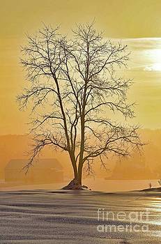 Cindy Treger - Sunrise After A Winter Storm