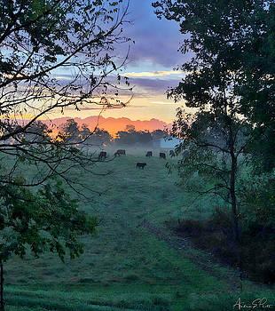 Sunrise Breakfast by Andrea Platt