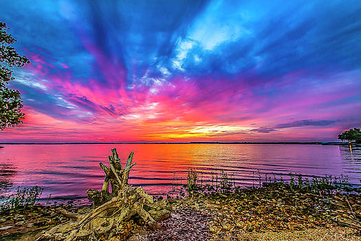 Sunrise Driftwood by David Wagenblatt