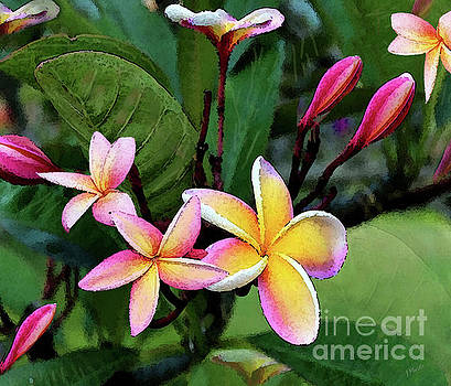 Sunrise Hawaiian Plumeria  by J Marielle